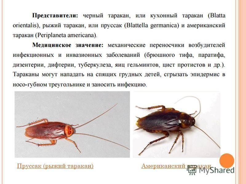 Значение тараканов - для чего они нужны в природе