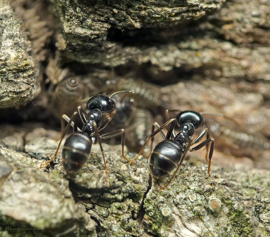Виды муравьев – описание и фото с названиями