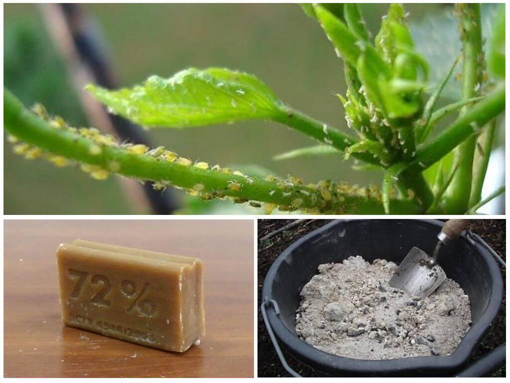 Мыльный раствор от тли и прочих вредителей растений мыльный раствор от тли и прочих вредителей растений