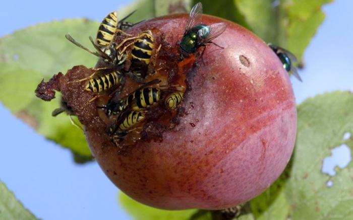 Как навсегда избавиться от малины на участке