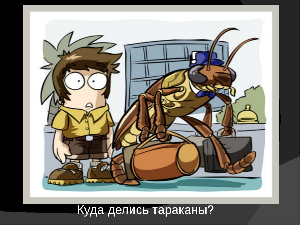 Где живут тараканы, и как быстро найти их гнездо в квартире