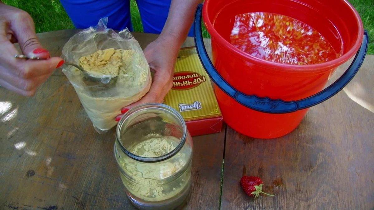 Горчица в огороде: применение от вредителей и болезней, от сорняков