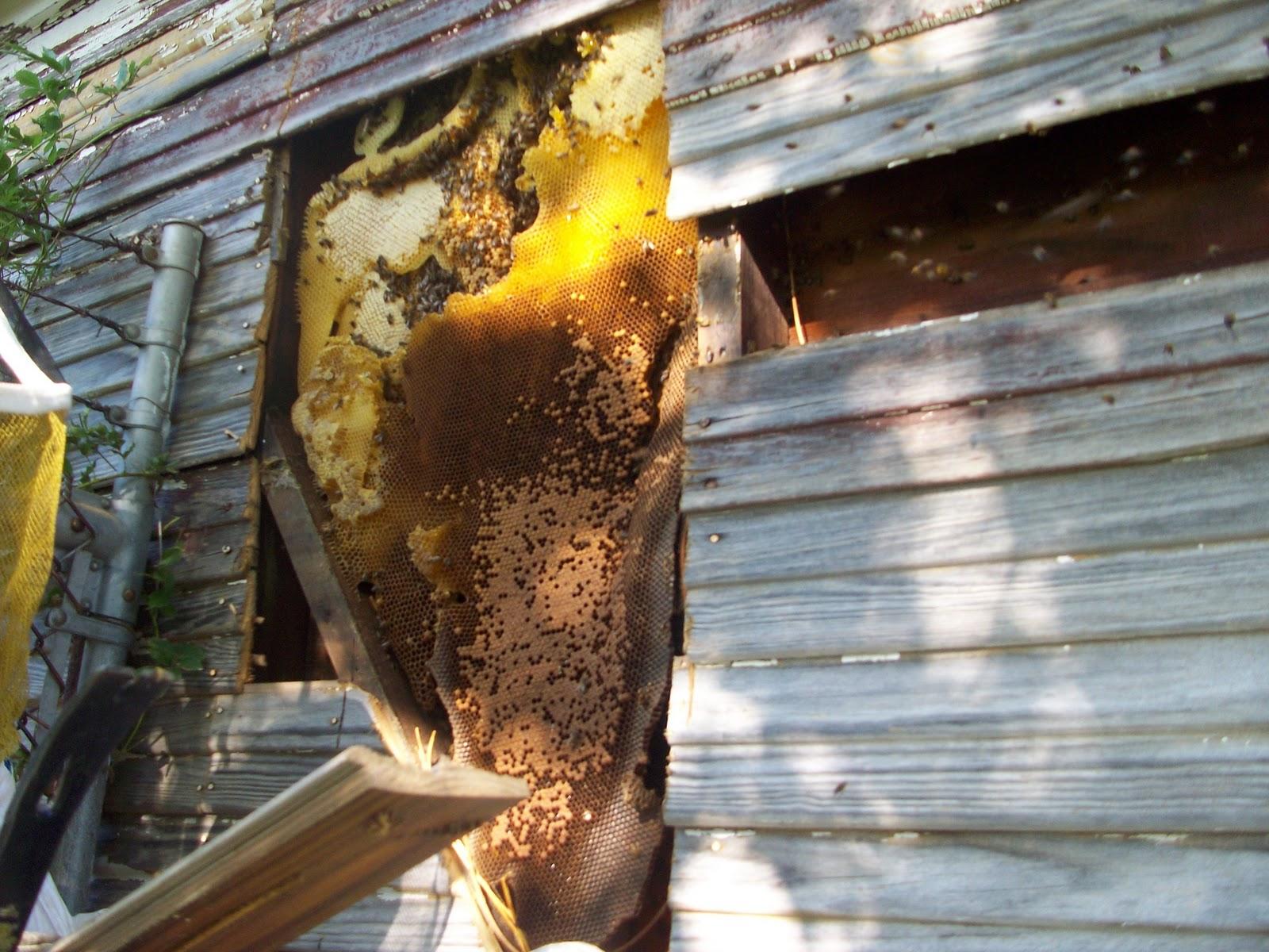 Способы борьбы с осами под крышей: как избавиться от опасного соседства?
