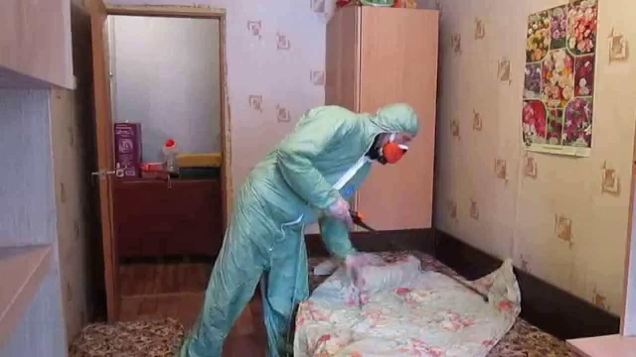 Что делать после обработки квартиры от клопов