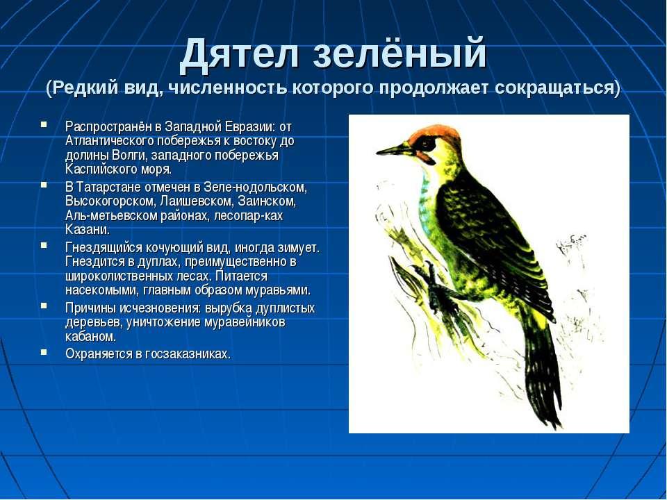 Парнопес крупный — блестящая опасность для ос бембексов