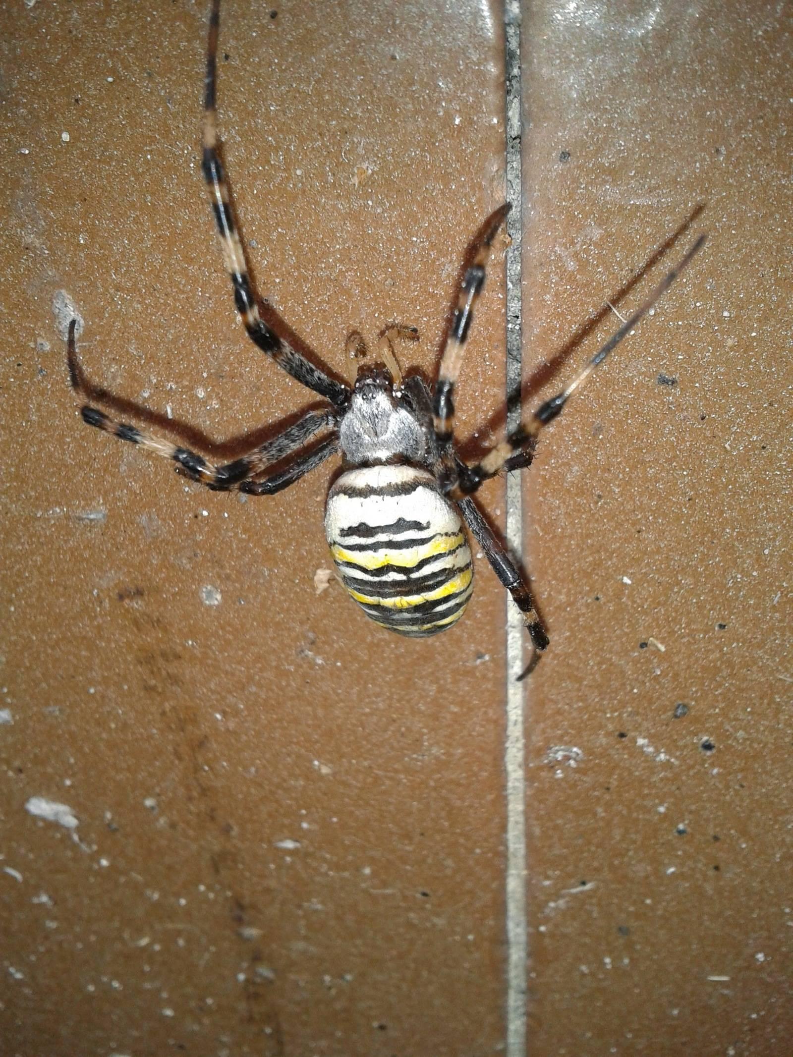 Виды пауков фото