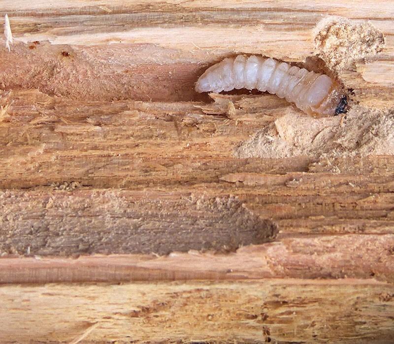 Способы профилактики и борьбы с жучками, которые завелись на вашей кухне в крупах - уничтожение вредителей