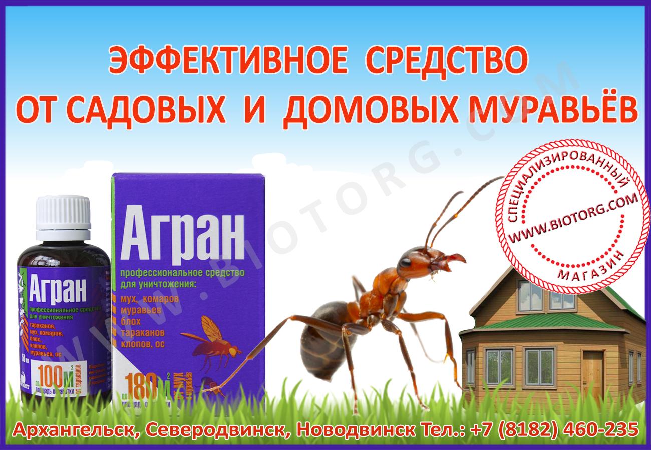 Топ-9 способов борьбы с муравьями на садовом участке +отзывы