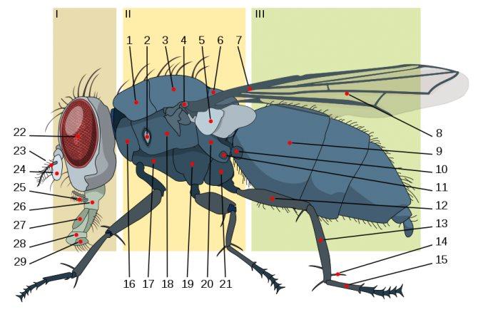 Откуда и почему в квартире появляются мухи: 5 основных факторов