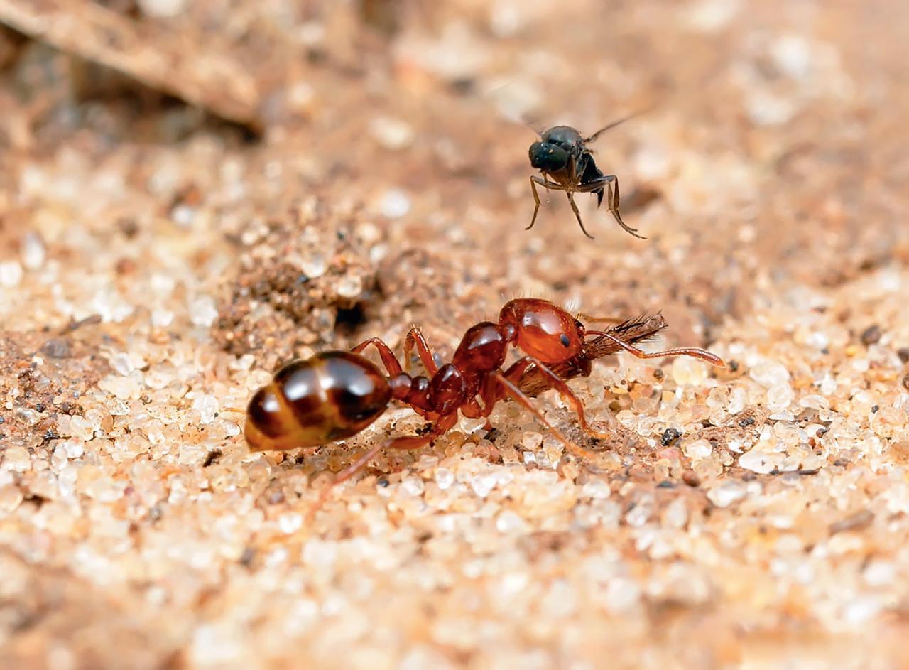Чего боятся муравьи в доме и саду, народные средства