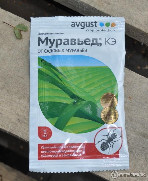 Средство от домашних муравьев в квартире - эффективная отрава