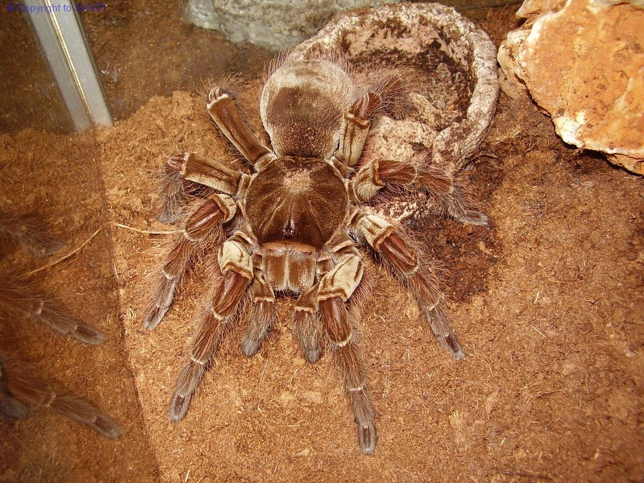 Самые большие пауки в мире: топ 10 крупнейших насекомых