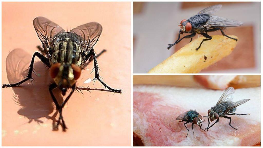 Почему мухи трут лапки друг о друга. зачем муха потирает лапки