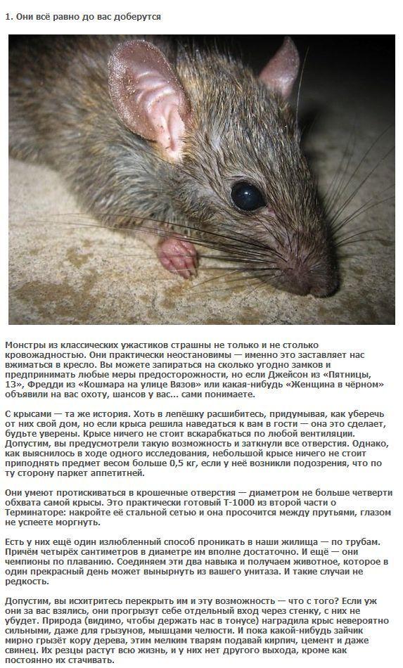 Как видят крысы в темноте и при свете [новое исследование]