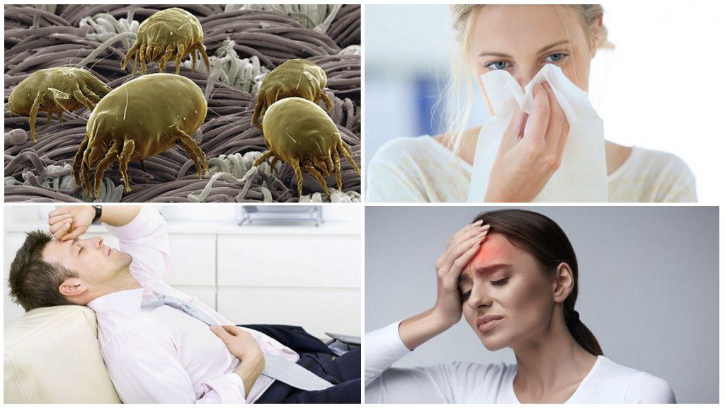 Пылевые клещи – симптомы, средства, как избавиться быстро
