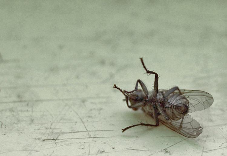Запахи, которых боятся мухи