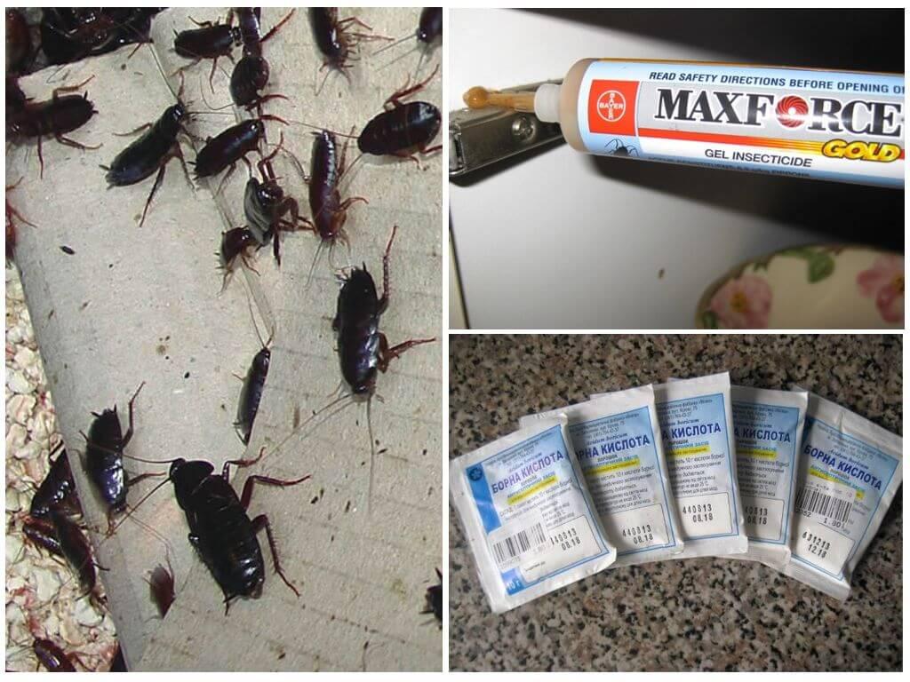 Методы борьбы с тараканами обитающими в общежитии