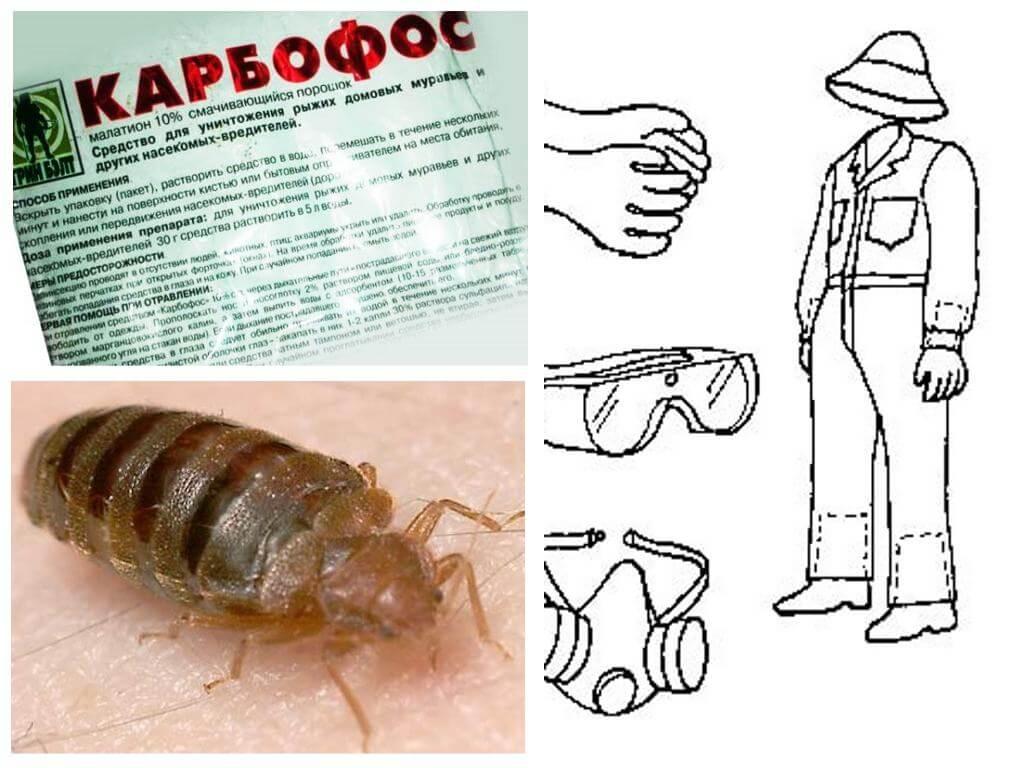 Как вывести клопов и насекомых карбофосом, и травить другими препаратами
