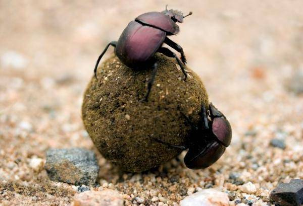 10 самых невероятных фактов о насекомых • всезнаешь.ру