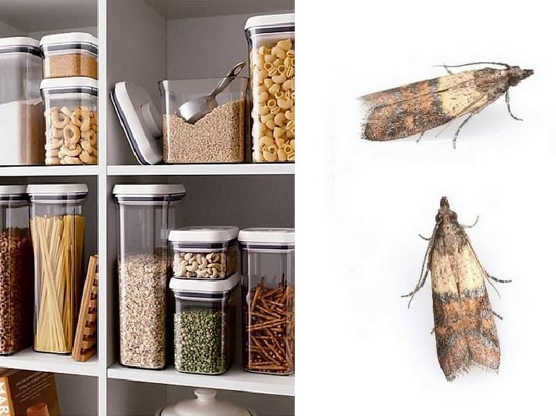 Как избавиться от пищевой моли на кухне и в квартире навсегда (в том числе народными средствами)