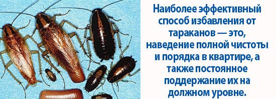 Почему появляются тараканы в квартире, куда обращаться и что делать, если насекомые ползут от соседей