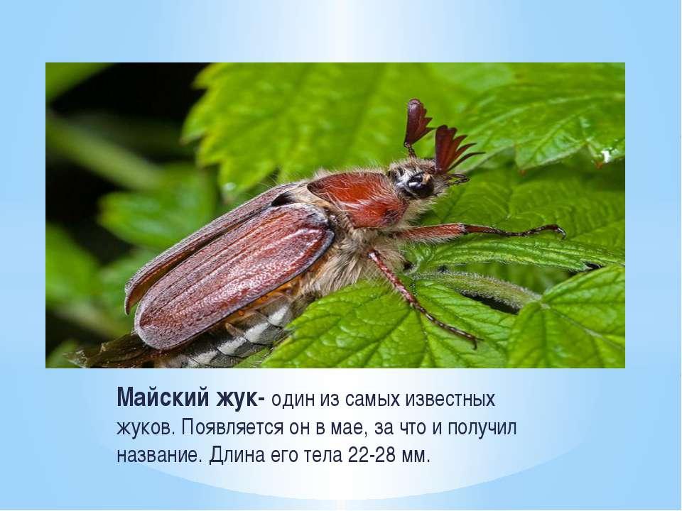 Сонник жук  приснился, к чему снится жук во сне видеть?
