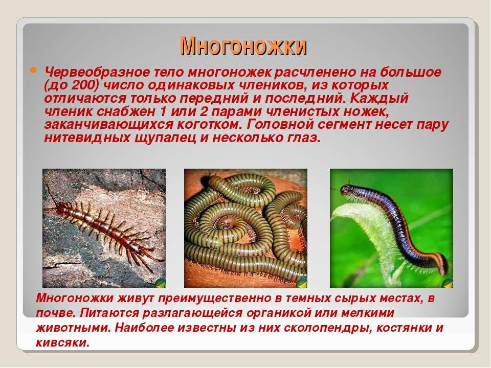 Сколопендра многоножка. описание, особенности, виды, образ жизни и среда обитания сколопендры | живность.ру