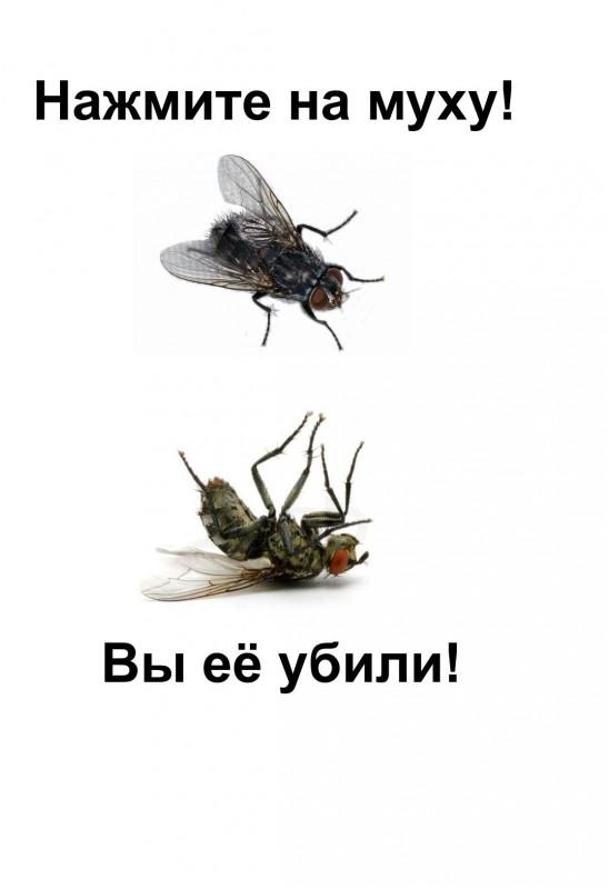 Как убить личинок мух: методы, средства, профилактика