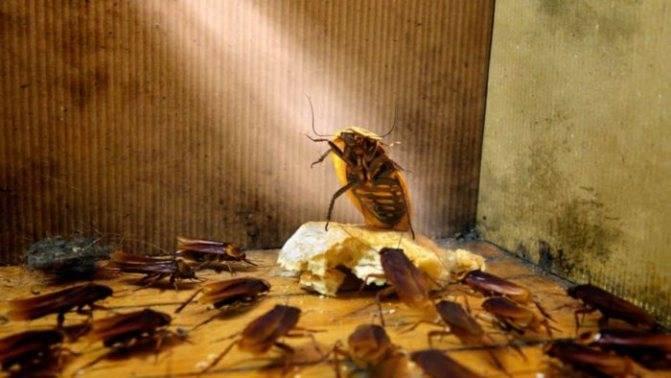 Много тараканов убиваю их