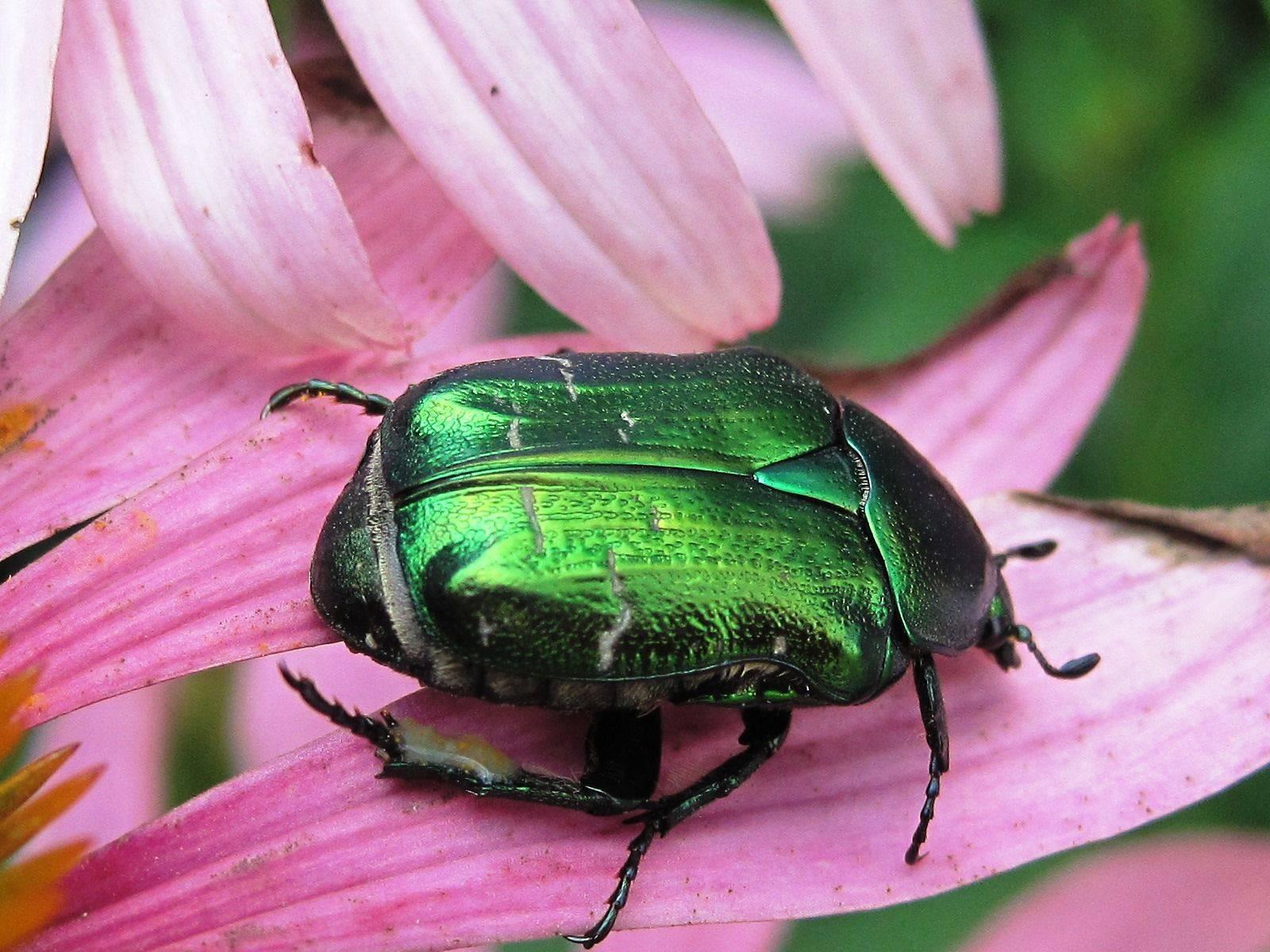 Мухи жуки