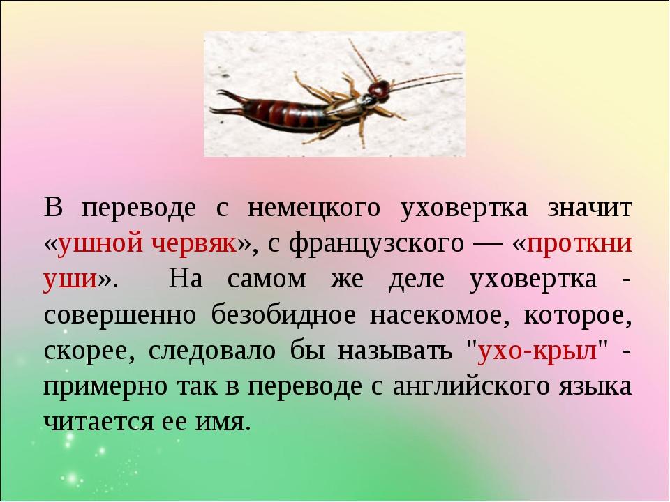 Чем опасна насекомое двухвостка для человека: ответы экспертов