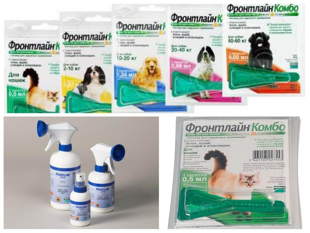 Фронтлайн комбо – препарат от блох, клещей и власоедов у собак