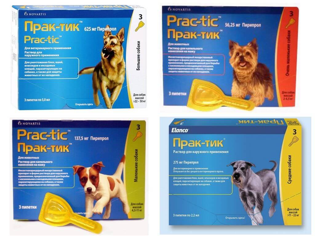 Практик от клещей для собак: инструкция по применению, отзывы, цена