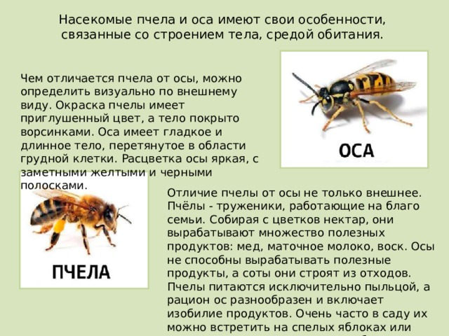 Отличия шмеля от пчелы и осы