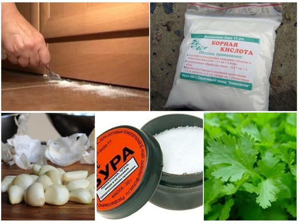 Народные средства от тараканов: приманки, рецепты и ловушки своими руками в домашних условиях