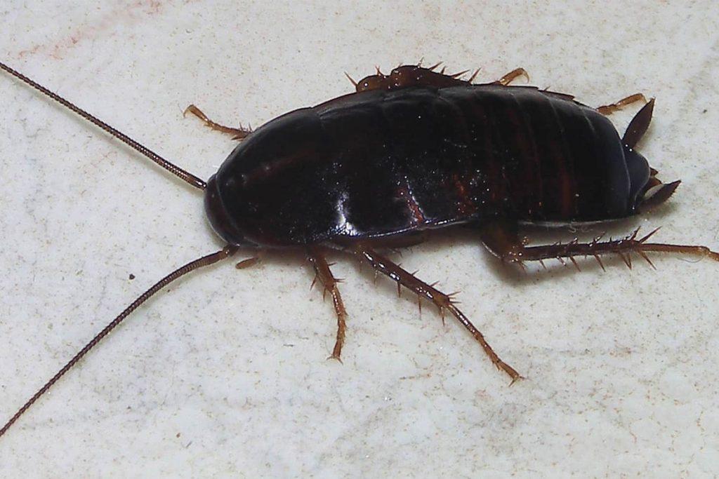 Мелок от тараканов состав и принцип действия