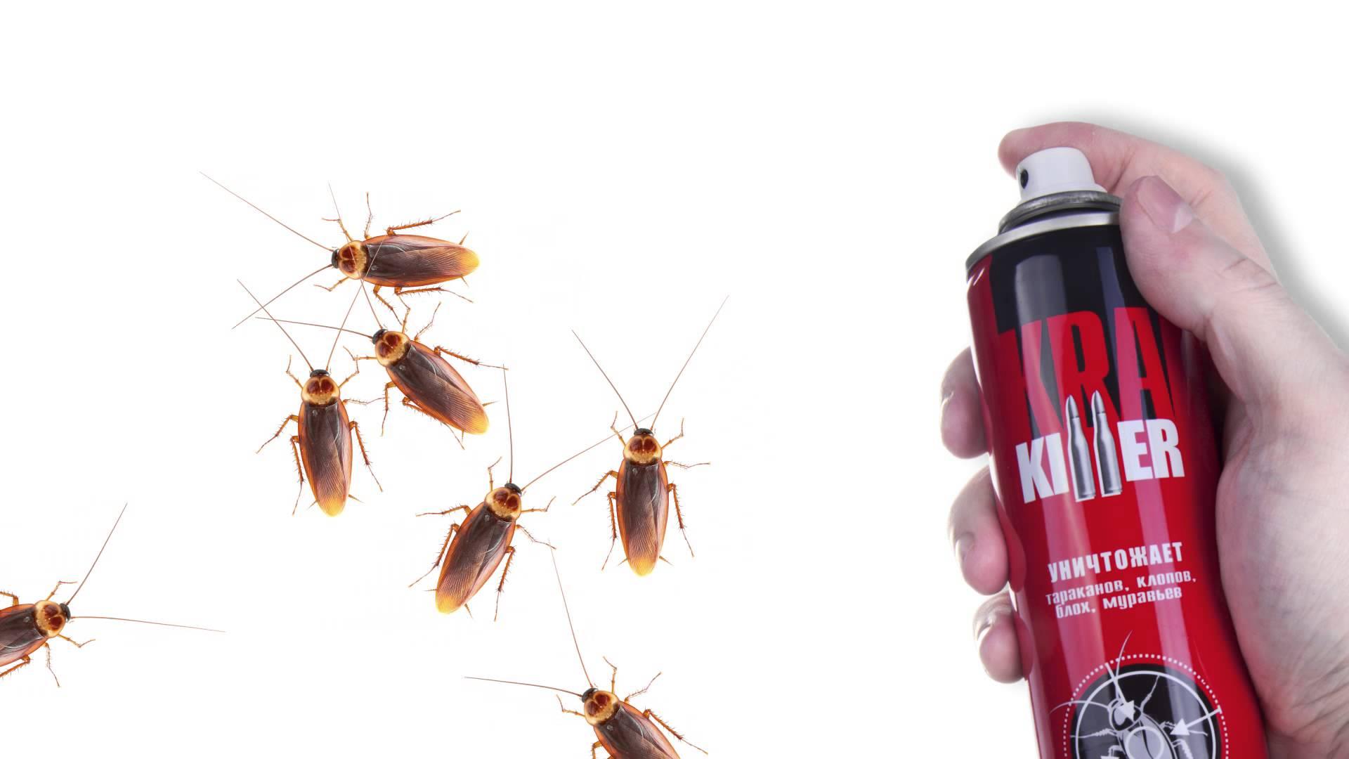 Самое эффективное средство от тараканов в квартире: бытовые, народные, профессиональные