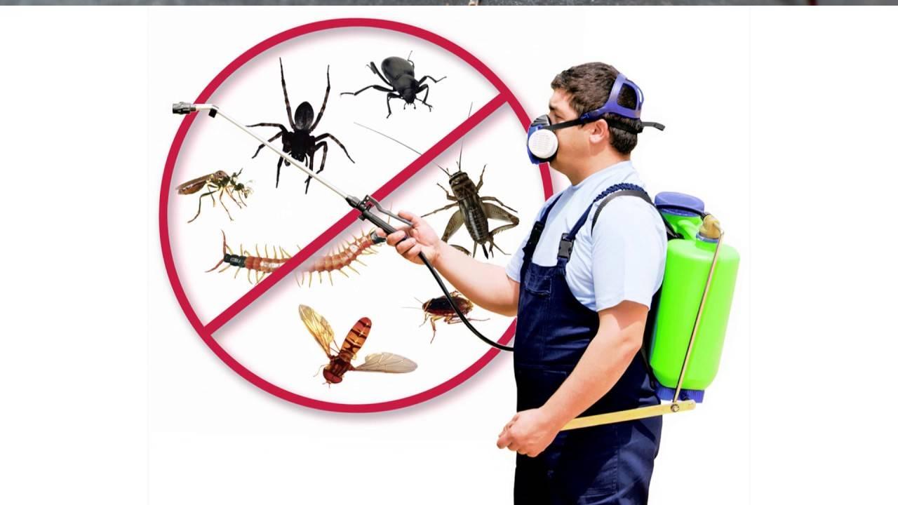 Профессиональная дезинфекция от тараканов: как это работает