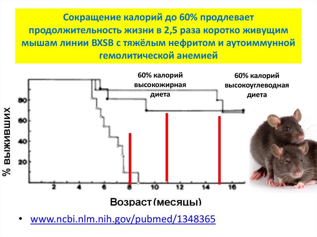 Мышь – виды, чем питаются, сколько живут, где живут, описание