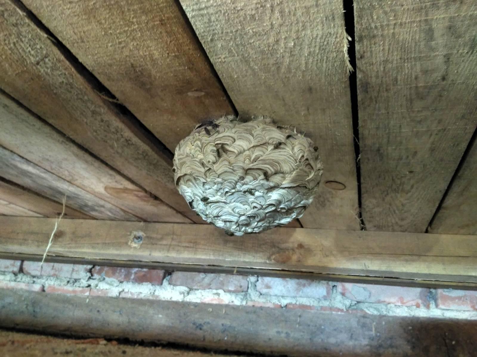 Как избавиться от осиного гнезда в труднодоступном месте