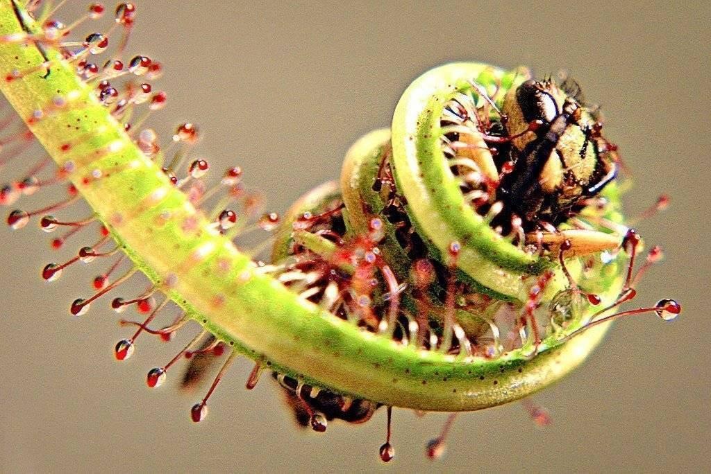 Цветы и растения против мух