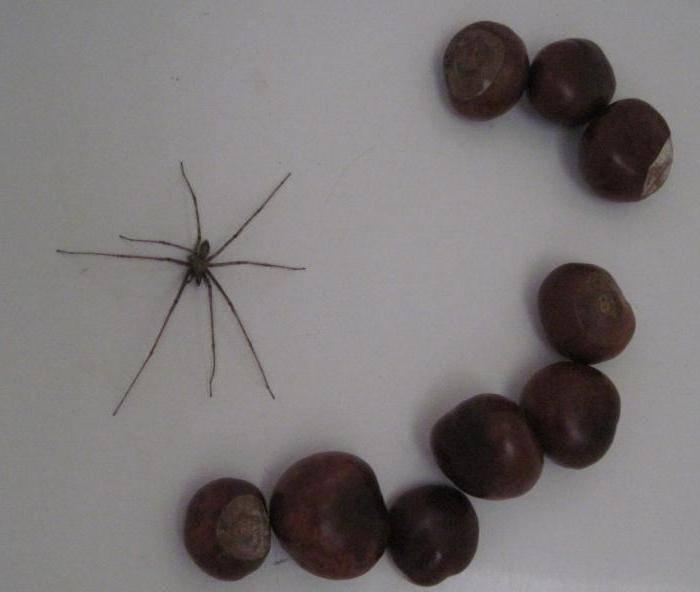 Можно ли убивать пауков в квартире?