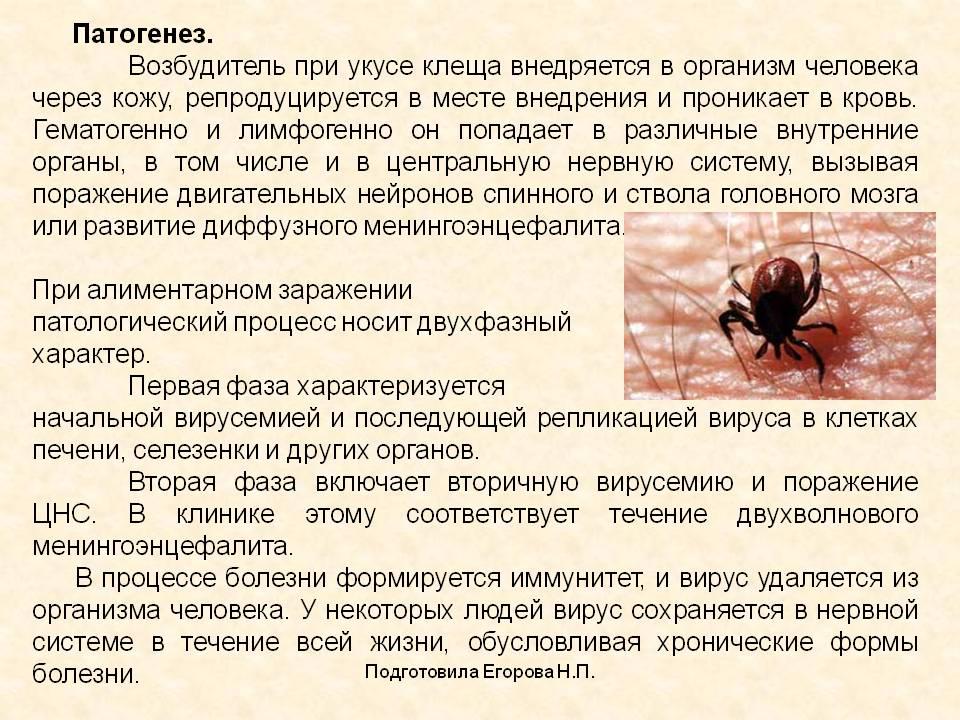 Клещевой энцефалит: коварный враг притаился в кустах