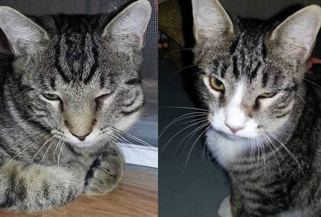 Что делать если кошку укусила оса? / как избавится от насекомых в квартире