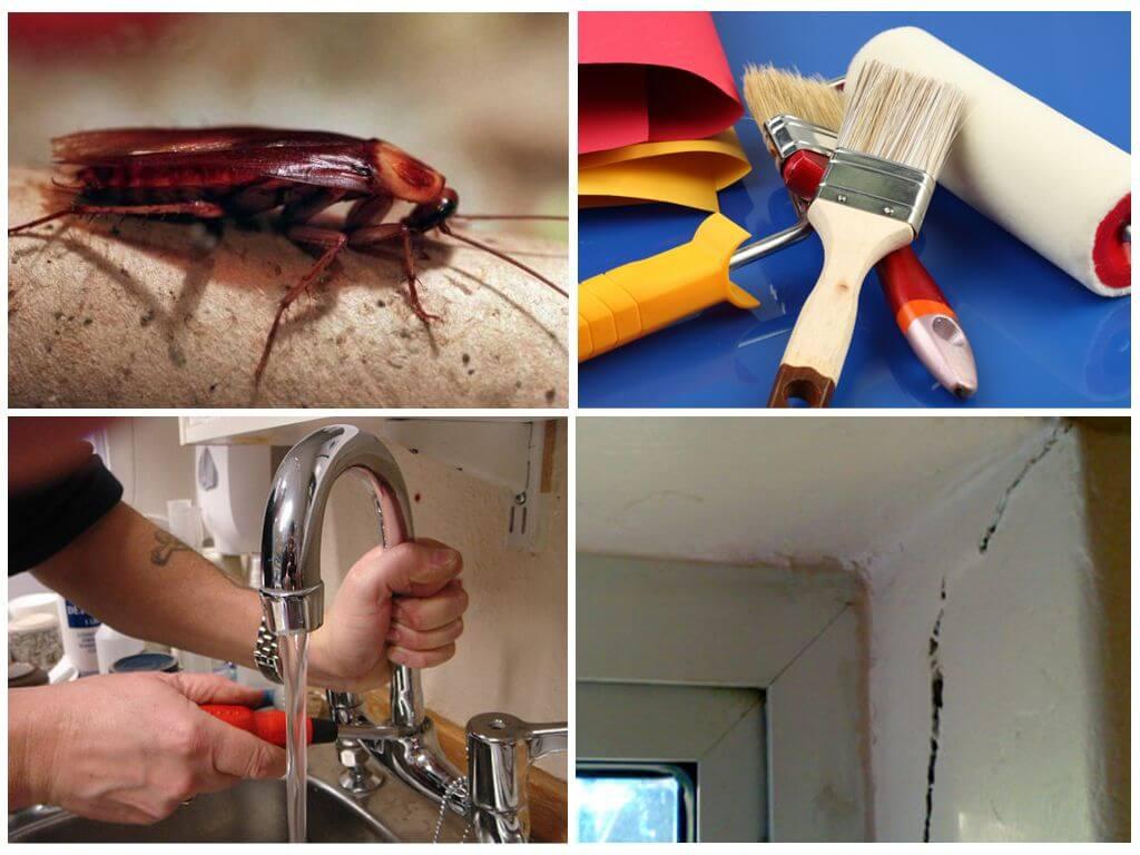 Как избавиться от тараканов в квартире навсегда: самые эффективные способы