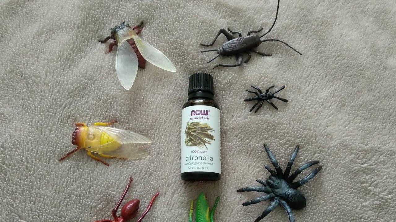 Какой запах отпугивает комаров: каких растений и эфирных масел они боятся и какую группу крови любят комары