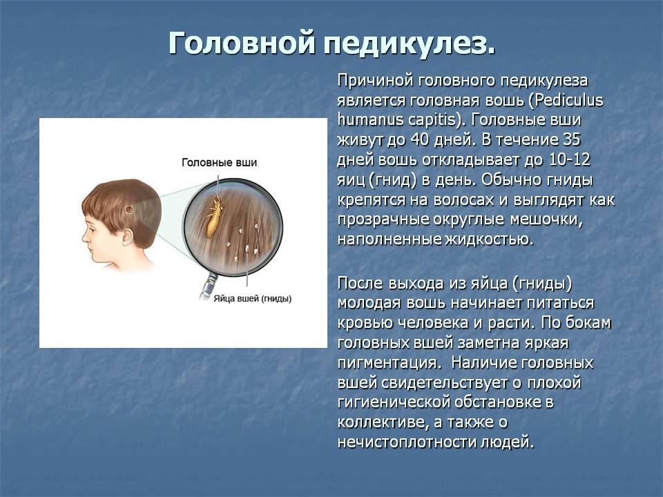Педикулёз: симптомы, причины появления болезни у детей и взрослых, методы лечения