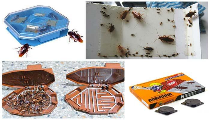 Самые эффективные ловушки для тараканов своими руками и покупные