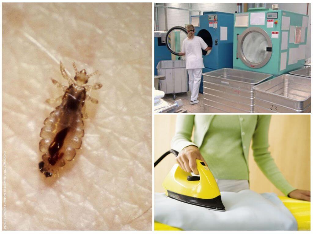Как и чем обрабатывать квартиру от вшей и гнид   все о паразитах