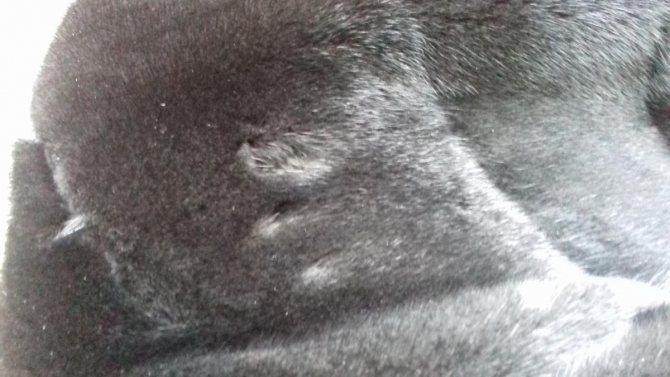 Можно ли защитить норковую шубу платяной от моли?